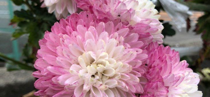 世界に一つだけの花🎵